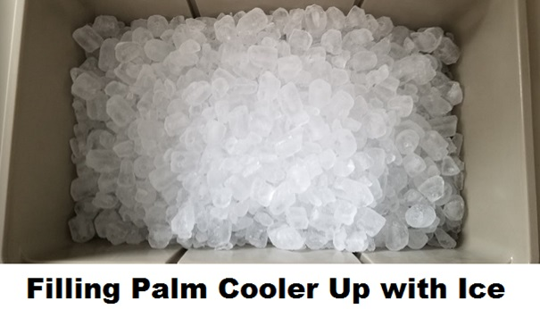 palm cooler filling with ice